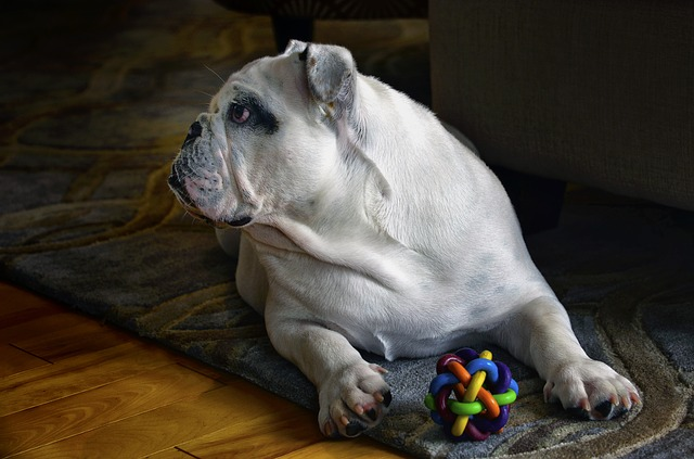 Dog Interactive Toys And The Importance of Making Your Dog Tired